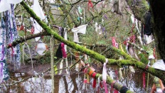 Clooties hanging on a tree by Madron Well - West Cornwall